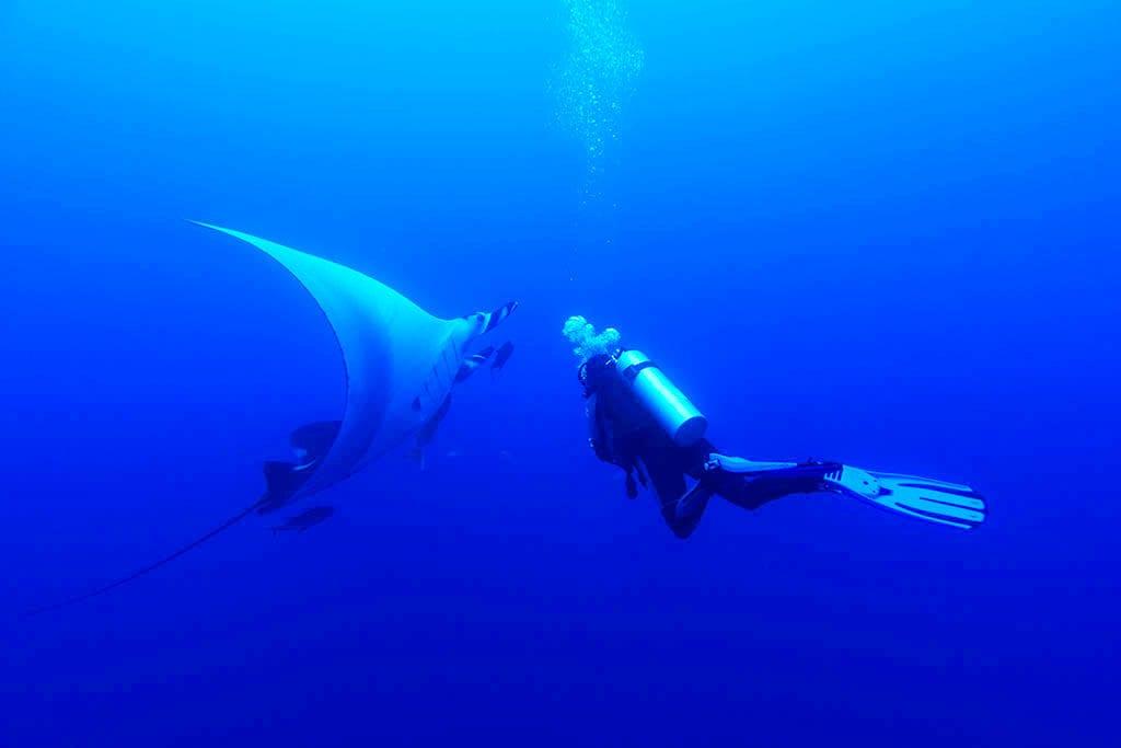 Oceanic Manta, Kids Sea Camp, manta
