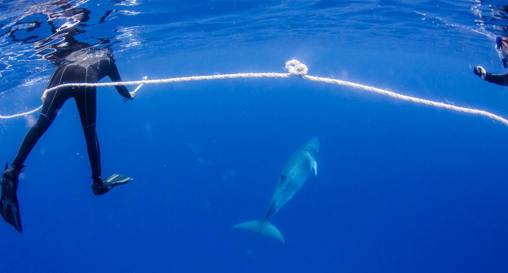 Australia, Kids Sea Camp, Minke whale