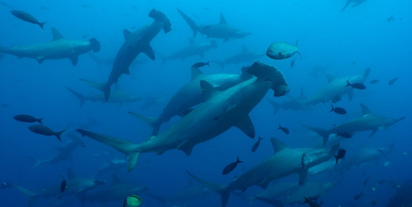 Galapagos, Kids Sea Camp, Hammerheads, family vacations, kids scuba divng