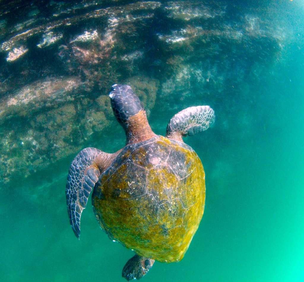Galapagos Turtles, Kids Sea Camp, kids and scuba diving