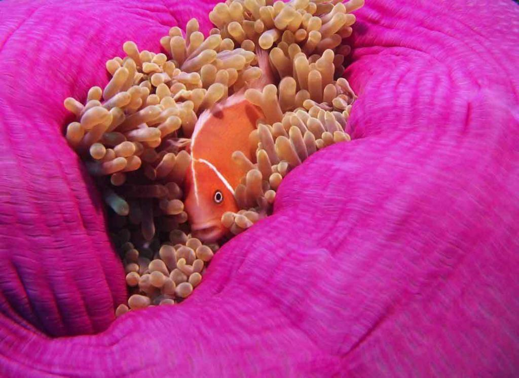 Palau, Kids Sea Camp, Sam Tour's, family vacations