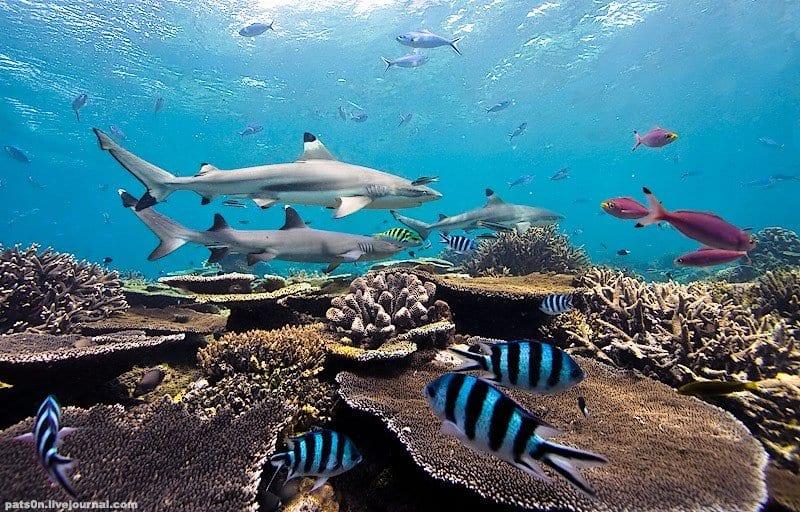 Palau, perfect dive vacation, family vacations