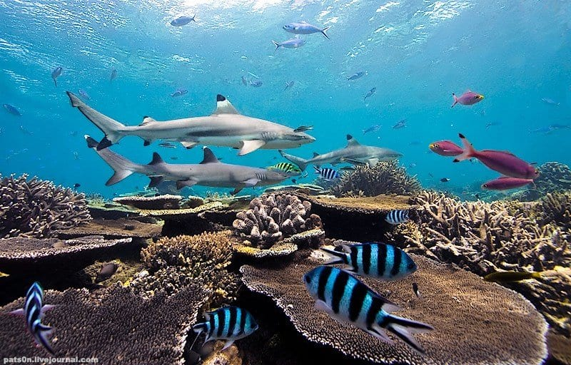 Palau, family dive vacation, family vacations, kids sea camp