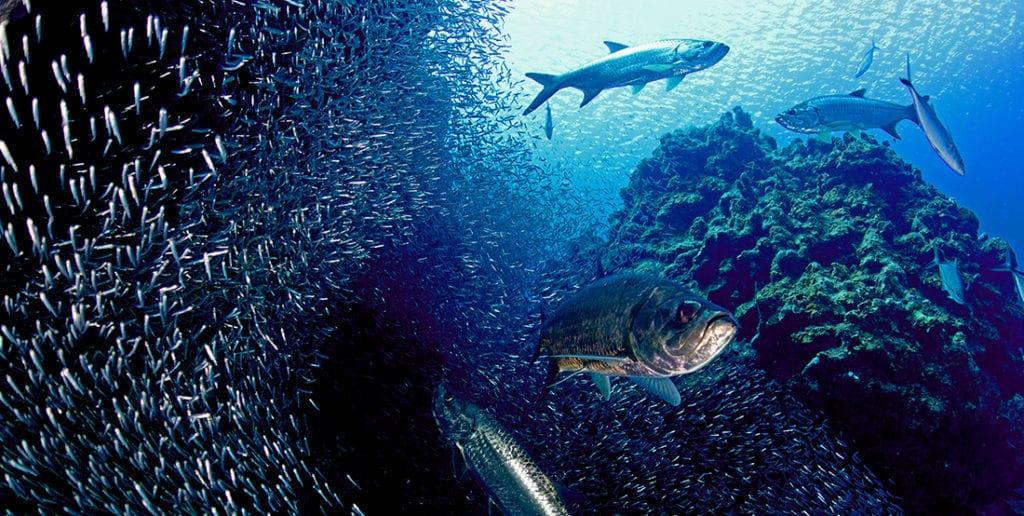 Tarpon, Kids Sea Camp, Cayman Brac Reef, Little Cayman, Family Dive Adventures