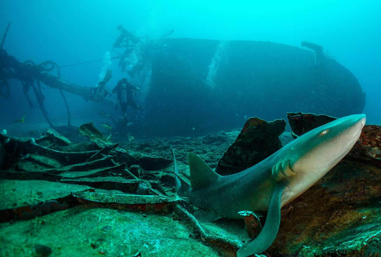 Grenada, Family Dive Adventures, Family Vacations, Kids Sea Camp, wreck, Nurse sharks, wreck diving