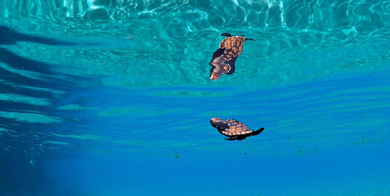 Kids Sea Camp, Family Dive vacations, greatest family vacations, baby turtles