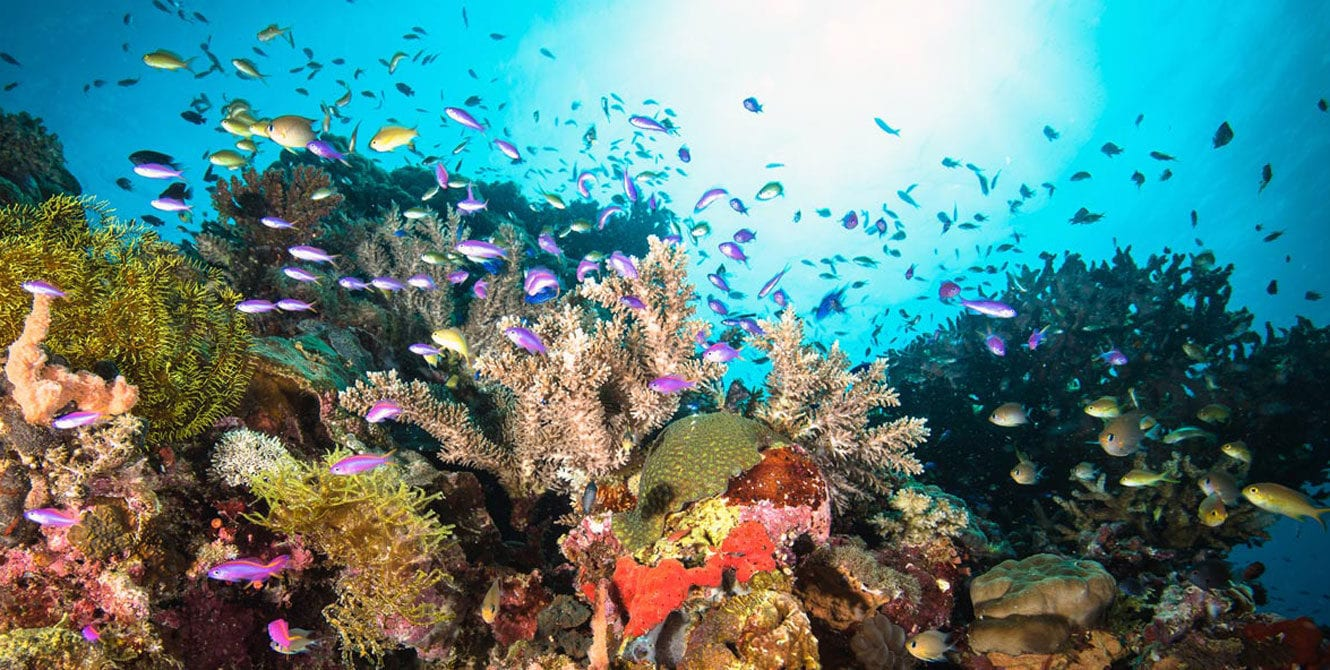 Reef, Coral, The Philippines, Kids Sea Camp, amazing memories