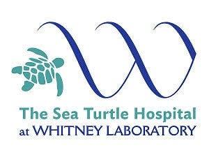 Sea Turtle Hospital at Whitney Laboratory logo