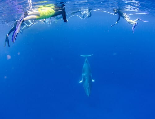 Minke whales, Australia, Cod Hole, Kids and diving