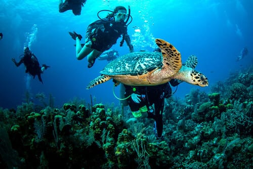 Sea Turtle, Kids Sea Camp, Kids and diving. Family dive adventures