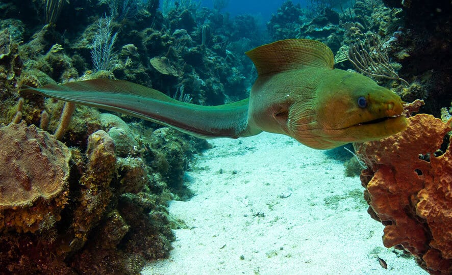 Moray eel, Kids and diving, family and diving