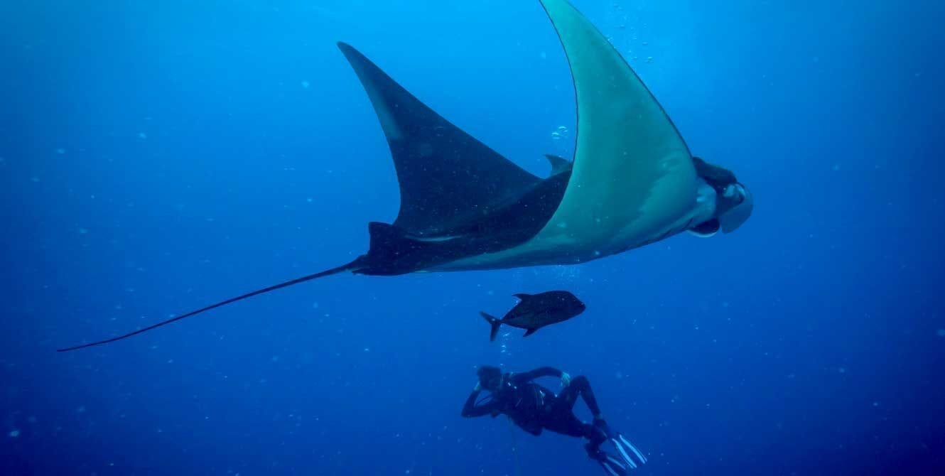 Manta, Mexico, Socorro, kids and diving, liveaboard