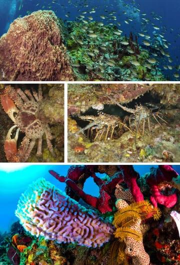 St. Lucia, family diving, Scuba, Kids Sea Camp, Family Poem